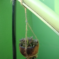 DIY- Recycled coconut shell planter