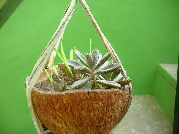 Popular planter | M@de by Lakshmi VN22