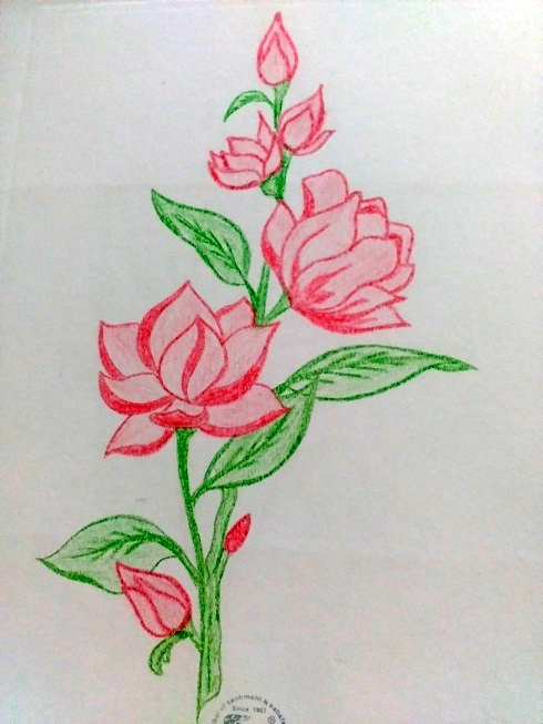 Gallery For gt Easy Colored Pencil Drawings Of Flowers